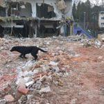 Rettungshund auf Trümmern